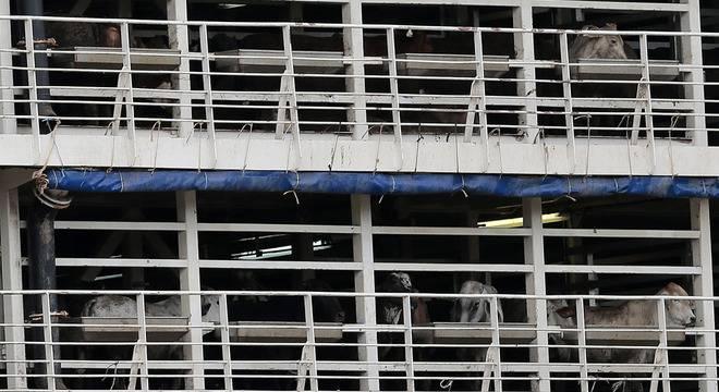 STF derruba proibição ao transporte de cargas vivas em Santos
